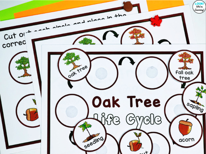 Oak Tree Life Cycle Activity Mat
