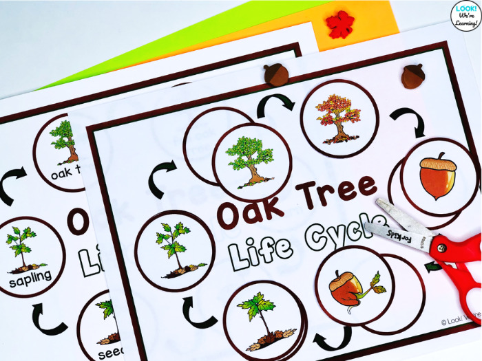 Oak Tree Life Cycle Cut and Paste Activity